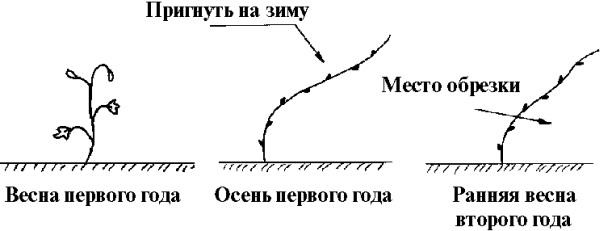5214583_009_1_ (600x231, 33Kb)