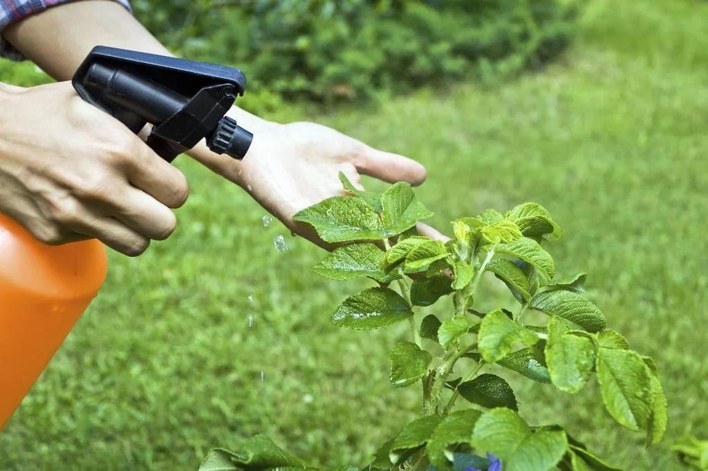 Весенняя обработка деревьев и кустарников