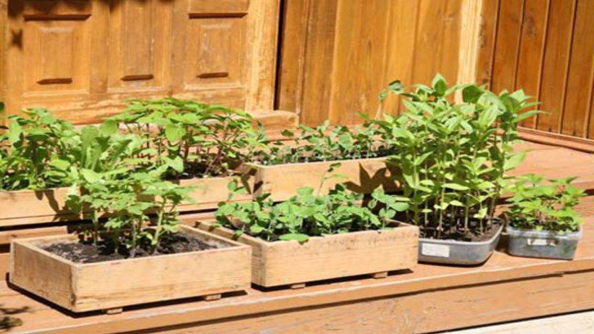 Тепличные помидоры – когда сажать и как правильно выращивать рассаду?