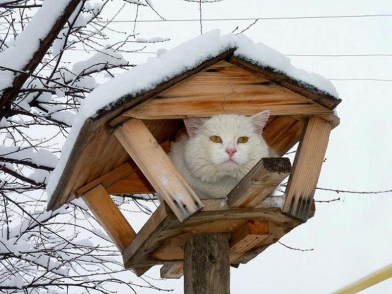 Кот в кормушке для птиц