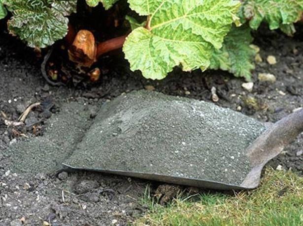 Посадка груши осенью: как правильно посадить – пошаговое руководство