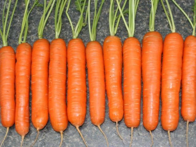 Какие сорта моркови можно садить под зиму