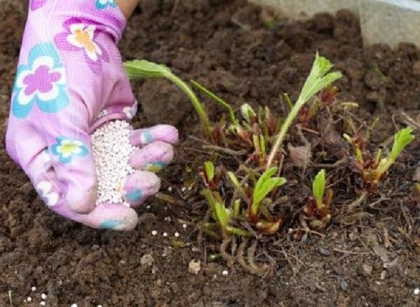 Какие удобрения надо вносить осенью в теплице