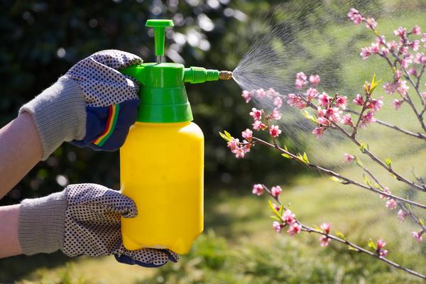 Зеленое мыло от вредителей – инструкция по применению на садовом участке